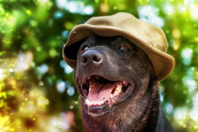 Krafttier Hund – Warum 2018 das perfekte Jahr ist, um deine Herzens-Projekte voranzutreiben!
