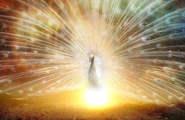 Neues Jahr, neues Glück Anjali Friedli