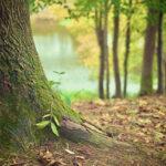 Quantenheilung mit der Energie der Bäume