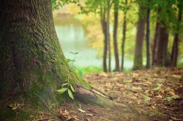 Quantenheilung mit der Kraft der Bäume